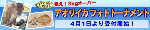【毎年恒例!】アオリイカフォトトーナメント 開催!!