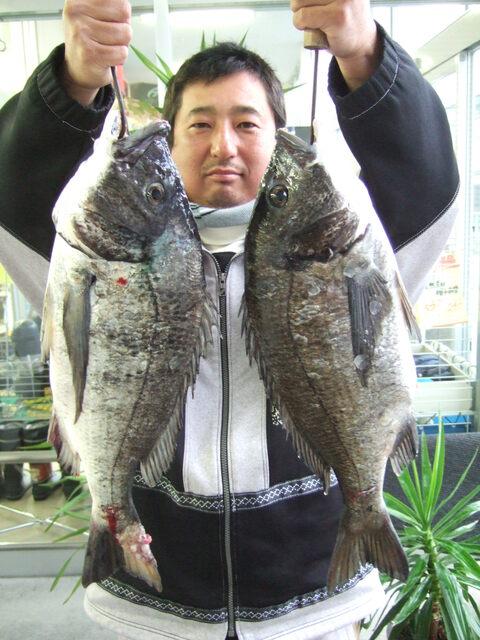 チヌ 52cm 2.2kg、 52cm 2.0kg