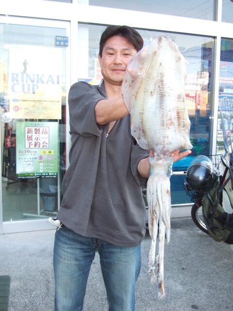 アオリイカ 胴長37cm 1.9kg