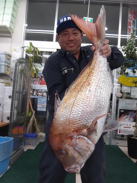 ヒラマサ 85cm 6kg