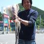 アオリイカ 胴長33.5cm 1660g