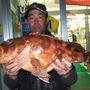 カサゴ 54.5cm 2.8kg