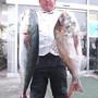 大漁です!
