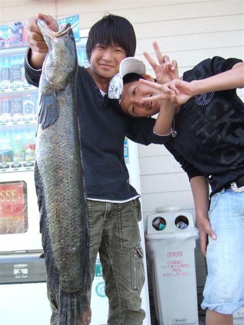 椹野川で74cmのライギョ