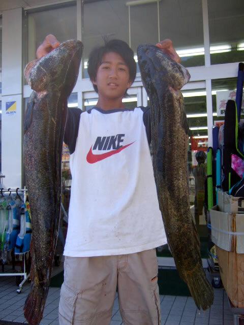 九田川で65cmのライギョ