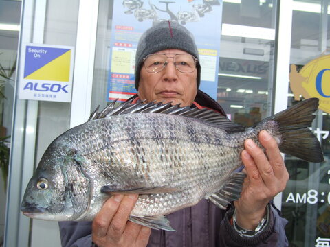 チヌ 49.2cm 2.1kg