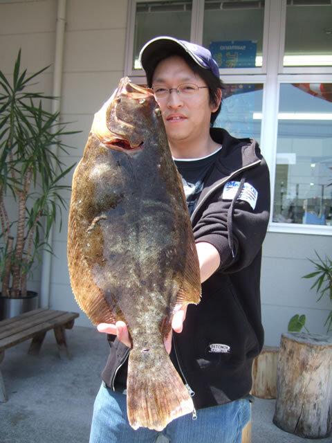 ヒラメ 52cm 1.5kg