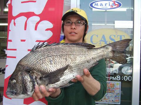 角島でチヌ 54cm 2.7kg
