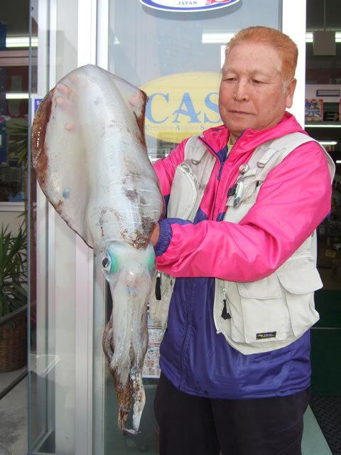 宇賀漁港でアオリイカ 3110g 胴長46cm