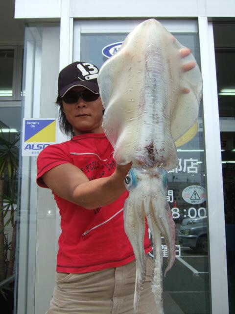 飯井漁港・アオリイカ 2282g 胴長39cm