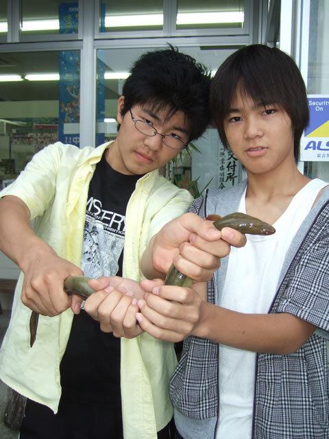 真締川 ウナギ 60cm