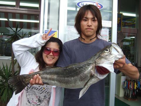 木屋川 シーバス 78.5cm  3.9Kg
