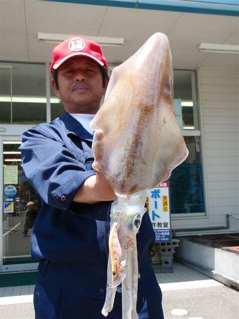 三見漁港で胴長38cm2080gのアオリイカ