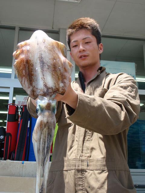 萩の越ヶ浜で胴長25.5cm800gのアオリイカ