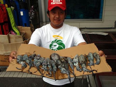奈古港で胴長10cm~15cmのアオリイカ