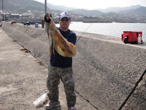 宇賀漁港 アオリイカ 胴長 41.5cm 2650g